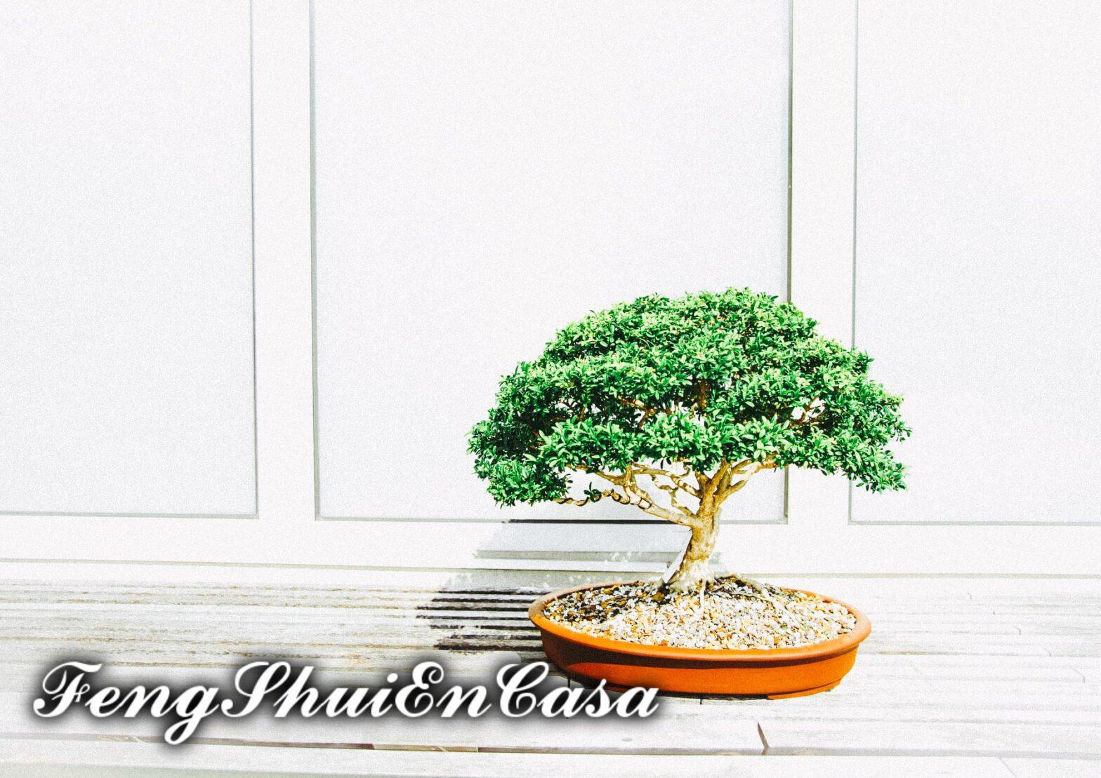 bonsai en feng shui significado