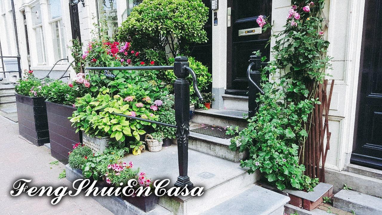 plantas de la suerte puerta principal feng shui