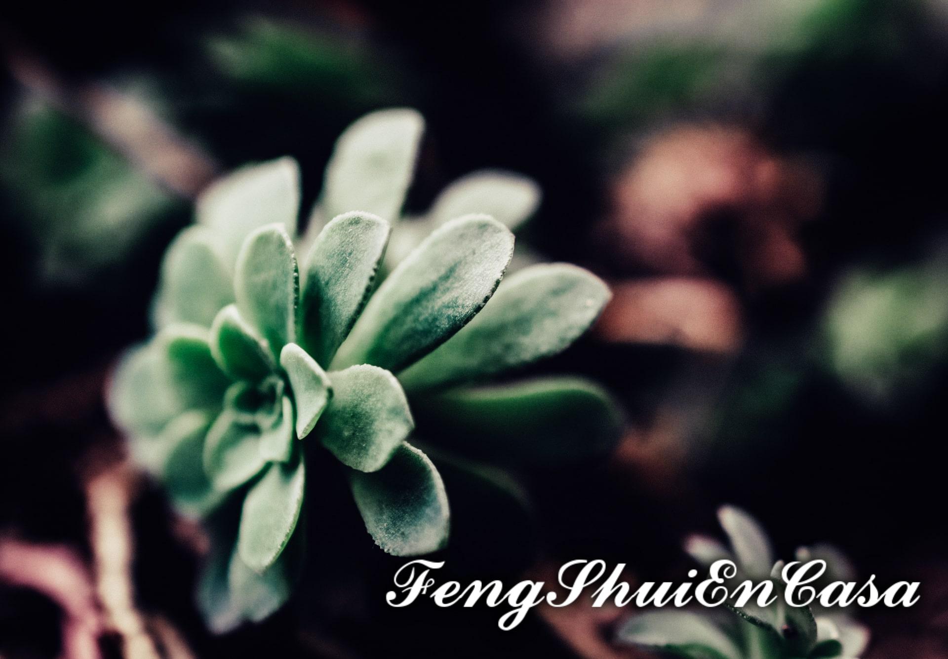 planta de jade feng shui